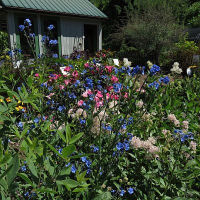 Tender Plants | Bay State Perennial Farm