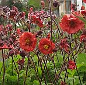 Geum Flames of Passion 175